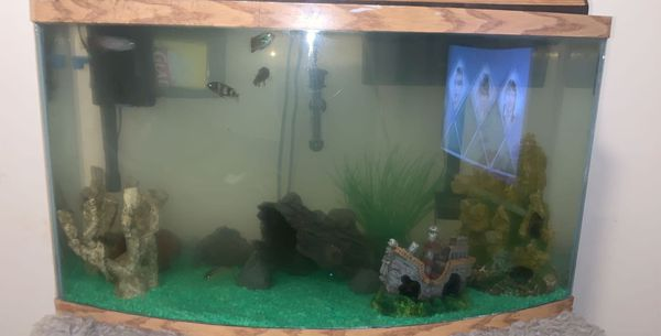 Fish Tank W/Stand