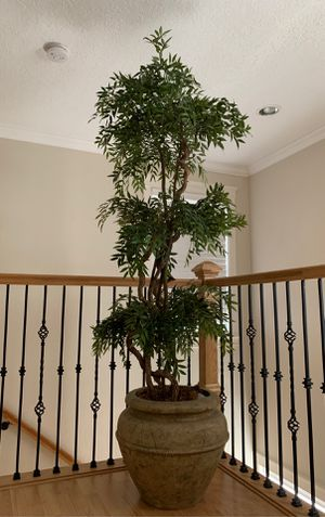 7ft house plant! for Sale in Portland, OR