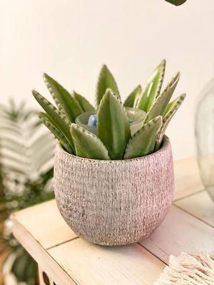 Scentsy Aloe Vera Wax Warmer for Sale in Corona, CA