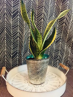 Live Snake Plant In White and Turquoise Ceramic Pot for Sale in Phoenix, AZ