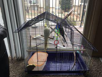 Cockatiel birds for Sale in Bethany,  OK
