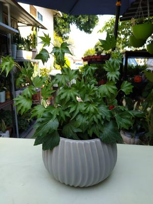 PLANT & POT for Sale in Paramount, CA