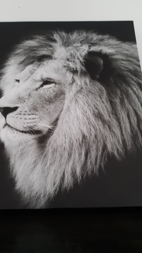 Frame painting of lion