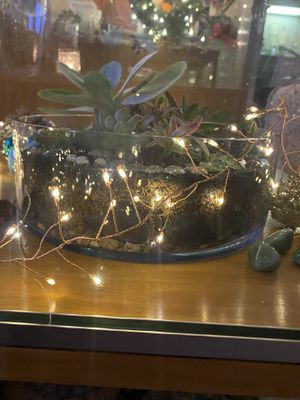 Live succulent arrangement for Sale in Farmers Branch, TX