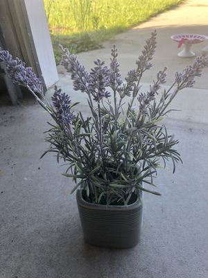 Lavender home decor for Sale in Fayetteville, NC
