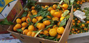 Mandarina for Sale in Modesto, CA