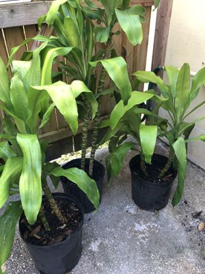 Plants for Sale in Tampa, FL