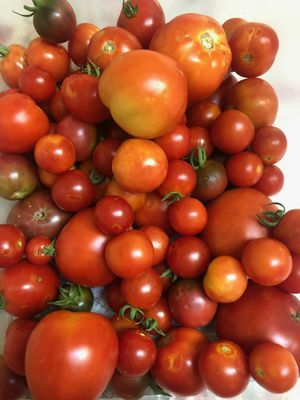 Home grown tomatoes for Sale in Lakewood, CO