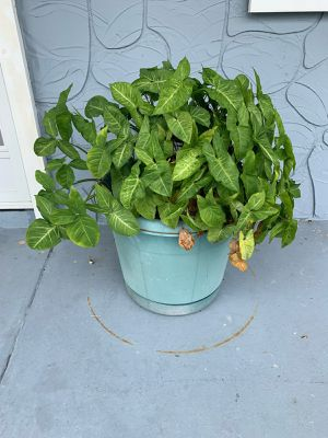 Large & Medium Pots for Outside Plants for Sale in Holiday, FL