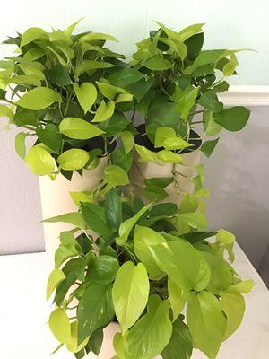 Plants for Sale in Acworth, GA