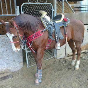 Horse Saddle ; Montura for Sale in Baldwin Park, CA