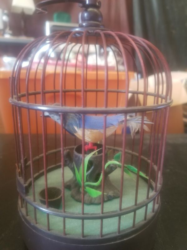 Chirping bird in cage