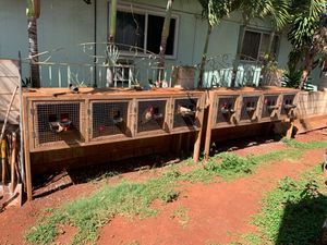 Upcoops, flypen, drop pens and stags for Sale in Waipahu, HI