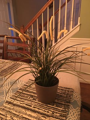 Plant & pot for Sale in Nicholasville, KY