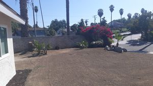 Free Palm Trees and Bush for Sale in Riverside, CA