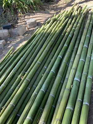 Bamboo poles for Sale in Nipomo, CA