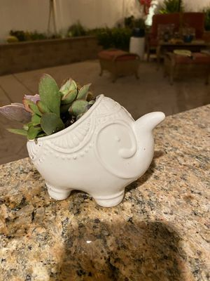 Succulent white elephant pot for Sale in Fontana, CA