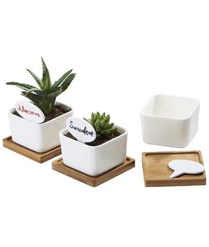 Planter Pots Indoor, 3 Pack 3.4 Inch White Ceramic Small Square Succulent Cactus Flower Plant Pot with Bamboo Tray and Little Plants Signs for Indoor for Sale in Tempe, AZ