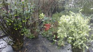 Plants for Sale in Madeira Beach, FL