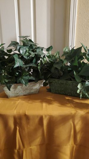 "Two ""Evergreen"" Plants (Fake) for Sale in San Antonio, TX"
