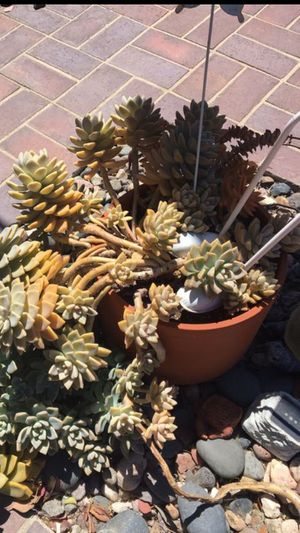 Succulents in nice pot for Sale in Corona, CA