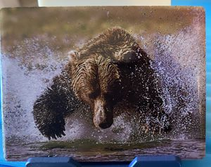 Refrigerator magnet. Katmai Alaska bear running for Sale in Placentia, CA