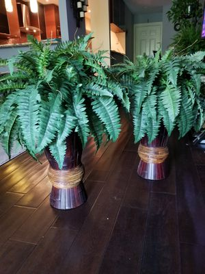Decorative plants for Sale in Bloomingdale, IL