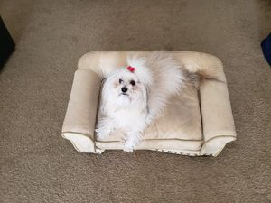 Small Dog Couch for Sale in San Marcos, CA