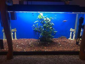 Fish tank 15 gallon for Sale in Arlington, VA