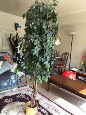 Artificial plant for Sale in Sharpsburg, PA