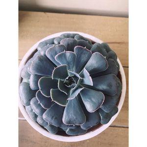 Succulent arrangement for Sale in Rosenberg, TX