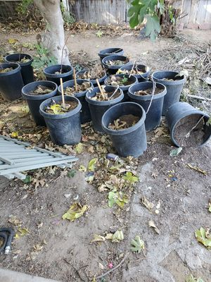 planting pots for Sale in Wildomar, CA