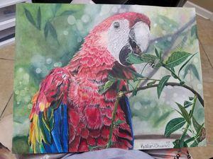 Macaw Drawing- Original Artwork for Sale in Wetumpka, AL