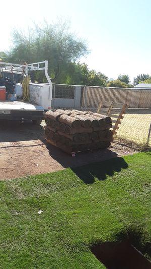 Rye grass 500 sf. $200.00 for Sale in Glendale, AZ