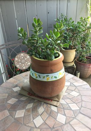 Jade Plant and Pot for Sale in Fresno, CA