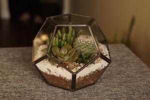 Geometric Succulent Terrarium for Sale in Anaheim, CA