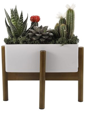 Succulent Planter with Bamboo Stand, Large 10 Inch Long Rectangular Pot(Plants not included) for Sale in Las Vegas, NV