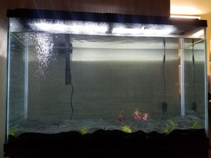 Fish Aquarium for Sale in Temple Terrace, FL