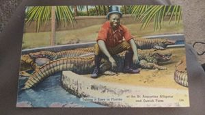 Antique St Augustine Florida Alligator Farm Postcard Excellent Condition for Sale in Orlando, FL