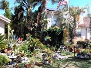 Succulent Outdoor Plant Sale. Range $25 and up. for Sale in Carlsbad, CA