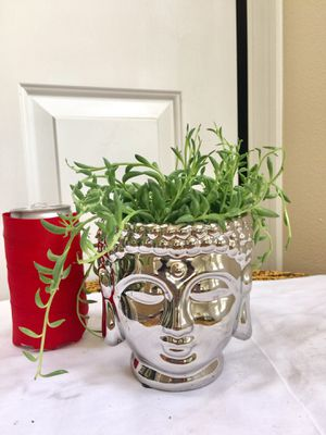 Banana String Succulent Plants in Silver Buddha Head Ceramic Planter Pot- Real Indoor House Plant for Sale in Auburn, WA