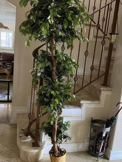 Topiary 6ft for Sale in Miami,  FL