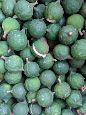 Macadamia seeds for Sale in Santa Ana, CA