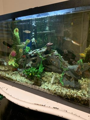 30 gallon fresh water tank for Sale in Menifee, CA
