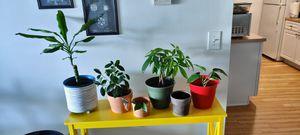 Plants, pots, planters, stands for Sale in Pontiac, MI