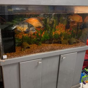 50inch Long And 62inch High Aquarium for Sale in Baldwin Park, CA