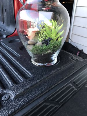 Succulent vase for Sale in Saint Charles, MO