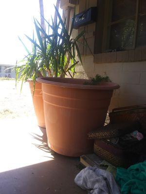 Lotsa Potsa + 2 extra large w plants for Sale in Phoenix, AZ