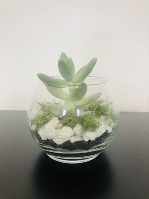 succulent plants crafted for Sale in Cambridge, MA