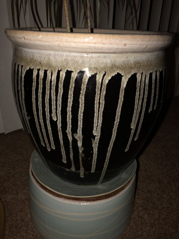 House Plant/Tree with Ceramic Pot